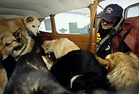 Vet Dennis Griffin Loads Dogs into Plane at Cripple