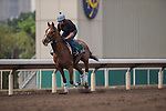 APR 24,2015:Red Cadeaux,trained by Ed Dunlop,prepares for the Audemars Piguet Queen Elizabeth 2nd Cup at Sha Tin in New Territories,Hong Kong. Kazushi Ishida/ESW/CSM