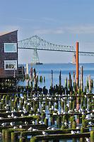 Seaguls resting on old building structure with Astoria Bridge. Astoria, Oregon