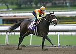 19 February 2011: Mildly Offensive by Sharp Humor breaks her maiden under jockey Rafael Bejarano at Santa Anita Park, Arcadia, CA.