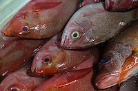 Bali, Indonesia.  Fish for Sale, Jimbaran Fish Market.