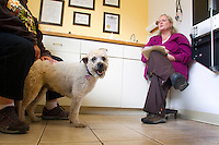 Madison, a 12-year-old Wheaton Terrier is all smiles now that her check up is over at the Eastlake Veterinary Hospital in Seattle, Washington. Veterinarian Tracy Fuelleman, DVM, (right) takes care of people's pets and helps their owners including Maria Paz (left), Madison's mom.