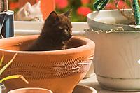 Kittens explore flower pots on a backyard workbench