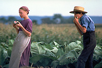 An Amish boy and girl take a break from harvesting tobacco in the field to eat watermelon. Amish teens. Lancaster Pennsylvania United States Fields.