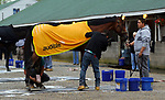 LOUISVILLE, KY -APR 25: Kentucky Derby hopeful Audible wears his special blanket after training for the Kentucky Derby at Churchill Downs, Louisville, Kentucky. It was provided by the audiobook company Audibile, who has been promoting him on their website. (Photo by Mary M. Meek/Eclipse Sportswire/Getty Images)