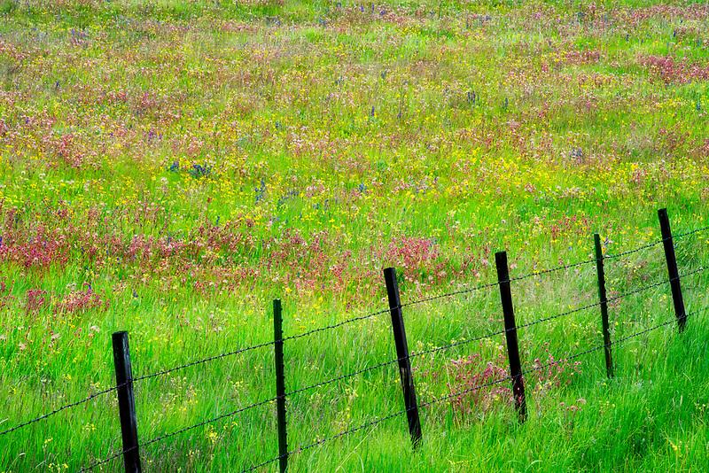 Fence line with wildflowers. Zumwalt Prairie Preserve, Oregon
