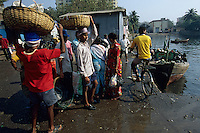 Asie/Inde/Maharashtra/Bombay : Sassoon Docks - Retour des bateaux de pêche