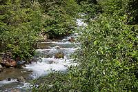 Gebirgsbach, im Bergwald, Gebirgs-Bach, naturnaher Bach, Waldbach, Wasser, Bach, Alpen, Kärnten, Österreich, Austria, alp, alps