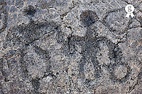 Pu'u Loa petroglyphs on lava (Licence this image exclusively with Getty: http://www.gettyimages.com/detail/83749927 )