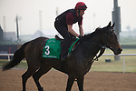 DUBAI,UNITED ARAB EMIRATES-MARCH 23: Seventh Heaven,trained by Aidan O'Brien,exercises in preparation for the Dubai Sheema Classic at Meydan Racecourse on March 23,2017 in Dubai,United Arab Emirates (Photo by Kaz Ishida/Eclipse Sportswire/Getty Images)
