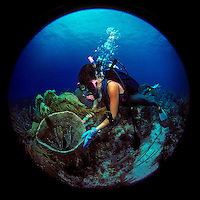 27 May 1986: Scuba Diver Sally Herschorn examins a basket sponge off the West End of Grand Bahama Island. Shot with a Nikon F2, Sigma 8mm Circular Fisheye in an Aquatica II-B Housing.  1/30 sec. @ f/8 with twin Ikelite 150L strobes, non-SST on full power manual. CC30R Filter...Mandatory Photo Credit: Ed Wolfstein Photo