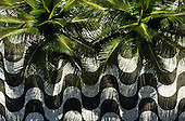 Rio de Janeiro, Brazil. Typical black and white mosaic pavement seen from above with palm trees on Copacabana beach front. Iconic design.