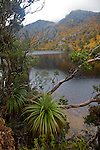 Vallée de Cradle.Crater lake entouré d'hetres rouges et ors (deciduous beech ou fagus arbre endemique a la Tasmanie).