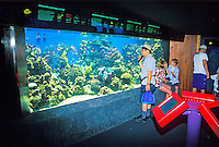 Many colorful and varied sea creatures can be found on display at the Waikiki Aquarium.