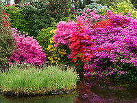 Teich mit Rhododendron im Garten, Schloss Hahnberg in Berg, Kanton St. Gallen, Schweiz<br /> rhododendron and pond, garden of castle Hahnberg in Berg, Canton St. Gallen, Switzerland