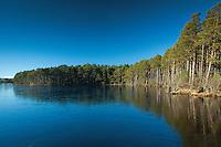 Loch Mallachie, Abernethy Nature Reserve, Cairngorm National Park, Highland