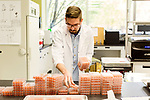 April 19, 2016. Morrisville, North Carolina. <br />  Research assistant Bryan LeBlanc sorts trays of insect food to be used in experiments on a variety of soy bean strains.<br />  The Bayer Crop Science Innovation Center was established in 2010 and employs researchers in genetics, genomics and agricultural biotechnology. Much of the company's seed and trait R&D goes through this center, which is located just miles from the Bayer greenhouses that will grow the seeds developed at the Innovation Center.
