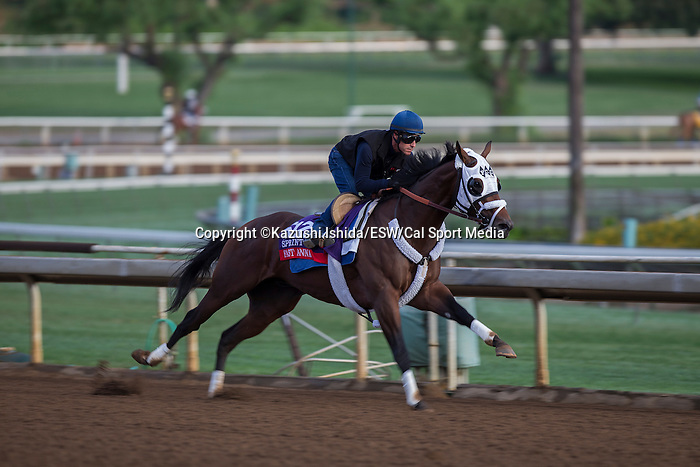 OCT 26 2014:Fast Anna trained by Kathy Ritvo, exercises in preparation for the Breeders' Cup Xpressbet Sprint at Santa Anita Race Course in Arcadia, California on October 26, 2014. Kazushi Ishida/ESW/CSM