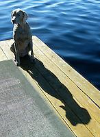 dog on dock