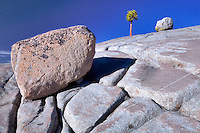 Granite rock and lone tree. Yosemite National Park, California