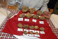 - truffle market in Alba, sale of white truffle....- mercato dei tartufi ad Alba, vendita di tartufo bianco