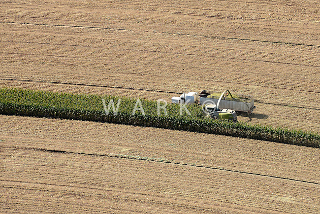 Corn harvest near Amarillo, Texas.  Sept 2013. 84056