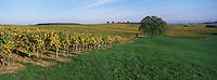 Europe/France/Alsace/67/Bas-Rhin/Cleebourg : Vignoble