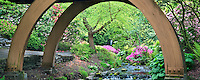 Stream, bridge, and blooming azaleas, Mallard duck and small waterfall at Crystal Springs Rhododendron Gardens, Oregon