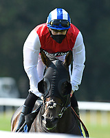 Positive ridden by Hector Crouch goes down to the start of The AJN Steelstock Sovereign Stakes  during Horse Racing at Salisbury Racecourse on 9th August 2020
