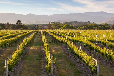 New Zealand, South Island, Marlborough Region, Renwick near Blenheim: Vineyards   Neuseeland, Suedinsel, Marlborough Region, Renwick bei Blenheim: Weinberge