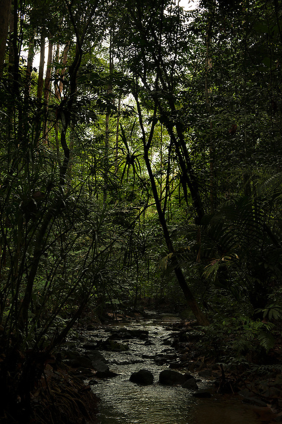 110125-N-7981E-478 PORT KLANG, Malaysia (Jan. 25, 2011)- A rainforest stream seen by Sailors assigned to USS Carl Vinson (CVN 70) during a hike near Templer Park in Kuala Lumpur, Malaysia while the ship was moored at Port Klang, Malaysia. Carl Vinson and Carrier Air Wing 17 are underway on a deployment to the U.S. 7th Fleet area of responsibility. (U.S. Navy photo by Mass Communication Specialist 2nd Class James R. Evans / RELEASED)