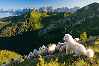 Exploring the wilderness of the Dolomiti Friulane Regional Park in Italy