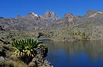 Lacs de Hall tarns (4297 m) et Mont Kenya. Senecons geants en premier plan