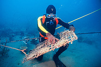 pearl diver cleaning pearl shell cage at pearl farm, Kimberley, West Australia, Indian Ocean