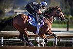 ARCADIA, CA - NOVEMBER 03:  Practical Joke, owned by Klaravich Stables Inc & William H. Lawrence and trained by Chad C. Brown, exercises in preparation for the Breeders' Cup Sentient Jet Juvenile  at Santa Anita Park on November 03, 2016 in Arcadia, California. (Photo by Alex Evers/Eclipse Sportswire/Getty Images)
