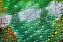 Panther chameleon close-up of skin {Furcifer pardelis}, Madagascar.