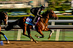 October 30, 2019: Breeders' Cup Juvenile Turf entrant Gear Jockey, trained by George R. Arnold II, exercises in preparation for the Breeders' Cup World Championships at Santa Anita Park in Arcadia, California on October 30, 2019. Scott Serio/Eclipse Sportswire/Breeders' Cup/CSM