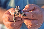 Joe Holding Loggerhead Hatchlings