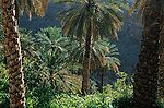 Village de Misfah et sa palmeraie.  Sultanat d'Oman. Moyen Orient.
