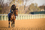 Four Wheel Drive, trained by trainer Wesley A. Ward, exercises in preparation for the Breeders' Cup Turf Sprint