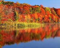 Morning light on hillside above Horseshoe Lake; Adirondack Park and Preserve, NY
