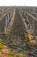 Stony. Newly ploughed. Vineyard. Medoc, Bordeaux, France