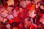 Fallen autumn leaves in Ogunquit, ME