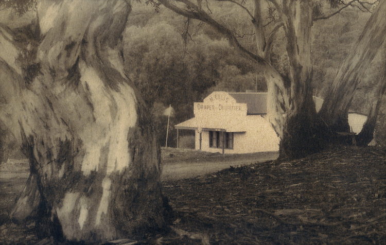 Old Drapers and Trees<br /> Cyanotype + Coffee toning