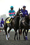 7 November 2009:  Zenyatta with Mike Smith up in the G1 $5 Million Breeder's Cup Classic in Arcadia, California.