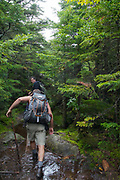 Hikers traveling south on the Appalachian Trail (Kinsman Ridge Trail) in New Hampshire White Mountains, USA make their way through a muddy section of the trail.
