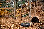 11.1.09 - Nature as a junkyard...Again...