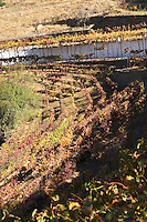 ungrafted nacional vineyards quinta do noval douro portugal
