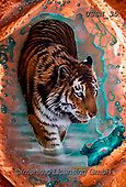 Sandi, REALISTIC ANIMALS, REALISTISCHE TIERE, ANIMALES REALISTICOS, paintings+++++coppertiger1(1),USSN35,#a#, EVERYDAY ,tiger,tigers, ,puzzles