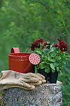 Gardening gloves, red watering can, and violas on a tree stump